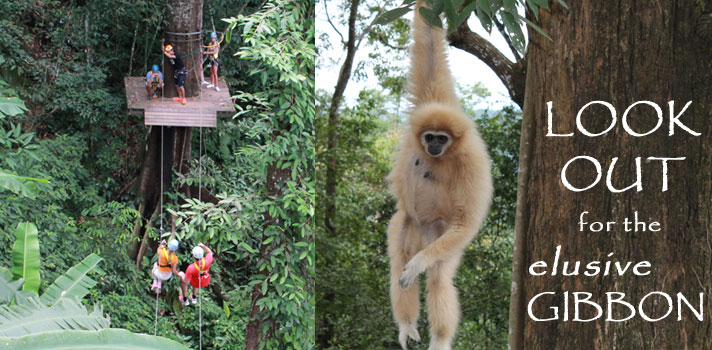 Flight of the gibbon, zipline canopy tour, the north, thailand